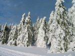 Schneewanderung im Schwarzwald - mit dem Auto in 50 min. erreichbar!